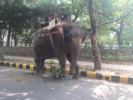 The first time I saw an elephant in Delhi